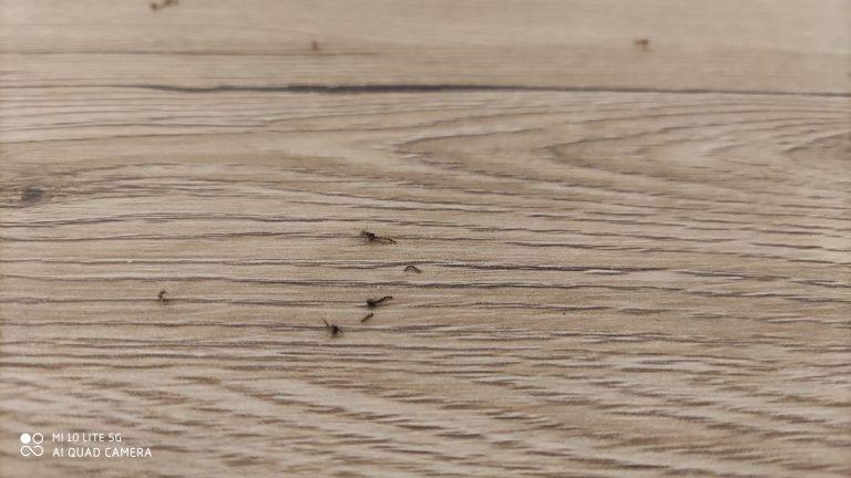Xiaomi Solove P1 szúnyogirtó teszt 11