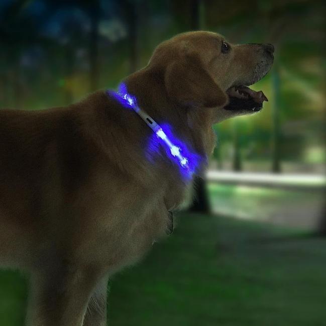 Kutyasétáltatás biztonságosan 9